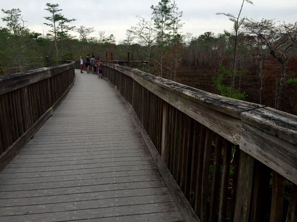 FollowGreg_BigCypress_Boardwalk_14