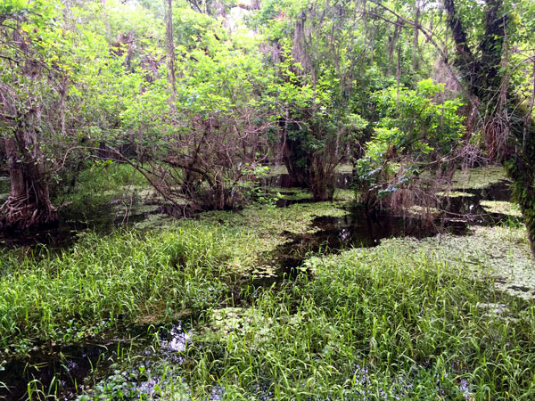 FollowGreg_BigCypress_Swamp_17
